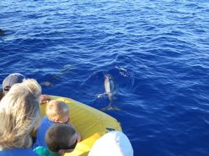 Maui Whale Trip 045
