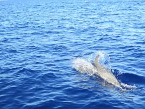 Maui Whale Trip 054