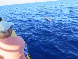Maui Whale Trip 060