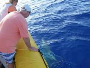 Maui Whale Trip 065