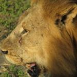 Chobe Park Morning 018